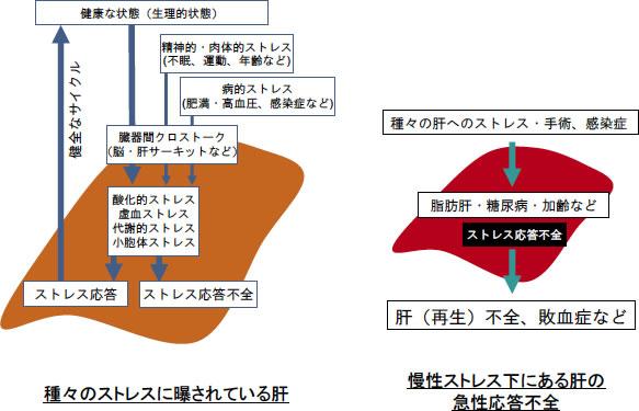 図1: 慢性ストレスおよび急性(外科)ストレスに... 図1: 慢性ストレスおよび急性(外科)ス